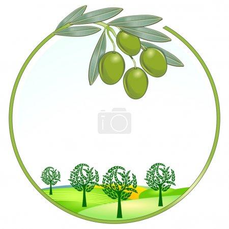 Olives unique landscape