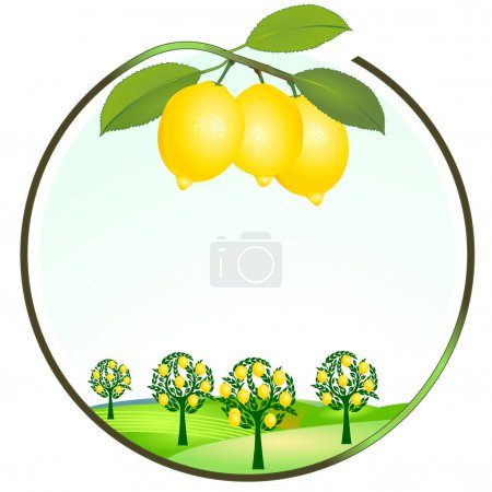 Illustration for Lemon cultivation - Royalty Free Image