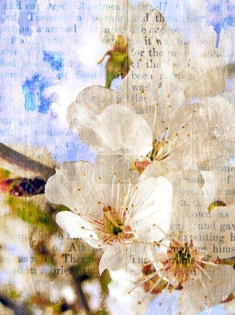 Photo pour Floraison printanière d'une cerise douce. Stylisation rétro - image libre de droit