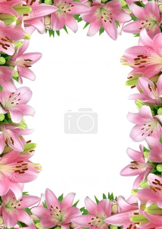 Frame of pink lilies