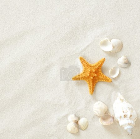 Photo for Beach with a lot of seashells and starfish - Royalty Free Image
