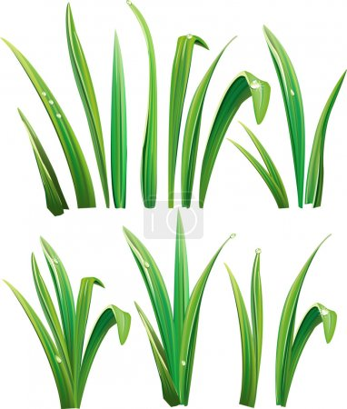 Illustration for Green grass on white - Royalty Free Image