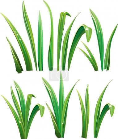 Grünes Gras auf Weiß