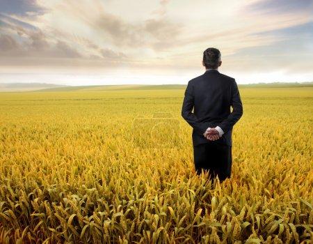 Photo pour Homme d'affaires observant le champ de blé devant lui - image libre de droit