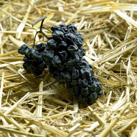 Photo pour Séchage des raisins pour le vin de paille (neronet ) - image libre de droit