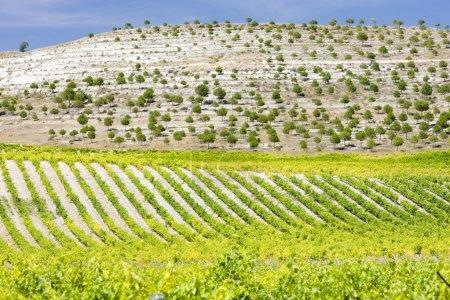 Photo pour Vignobles près de Villabanez, Province de Valladolid, Castille et Léon, Espagne - image libre de droit