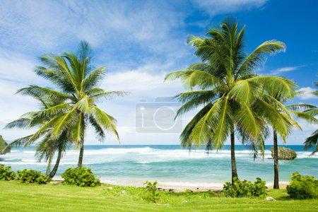 Photo pour Bathsheba, Côte Est de la Barbade, Caraïbes - image libre de droit