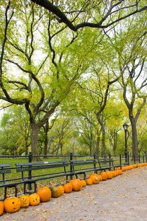 Photo pour Autumnal Central Park, New York, États-Unis - image libre de droit