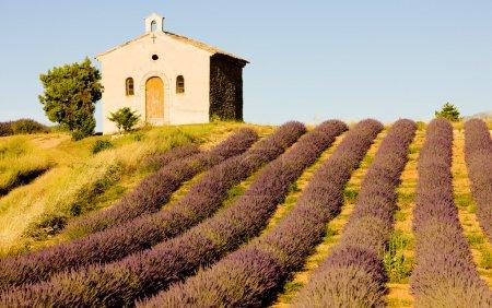 Foto de Capilla con campo de lavanda, meseta de valensole, provence, Francia - Imagen libre de derechos
