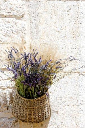 Photo pour Bouquet de lavandes, aiguines, departement var, provence, france - image libre de droit