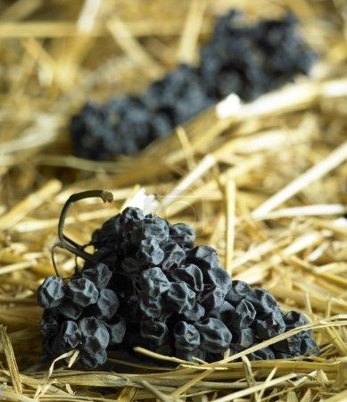 Photo pour Séchage des raisins pour le vin de paille - image libre de droit