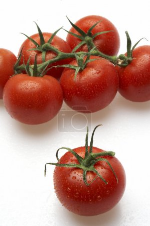 Photo for Tomatoes - Royalty Free Image