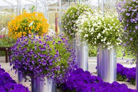 Photo pour Bouquets de fleurs, Jardins Keukenhof, Lisse, Pays-Bas - image libre de droit