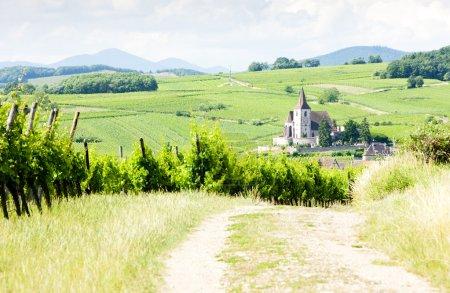 Hunawihr with vineyards, Alsace, France