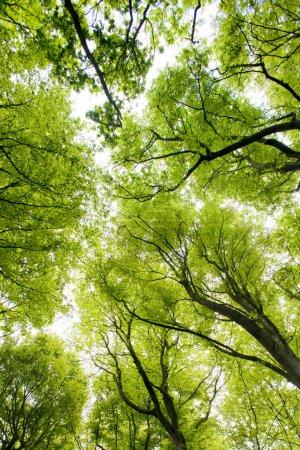 Photo pour Forêt, Bretagne, france - image libre de droit