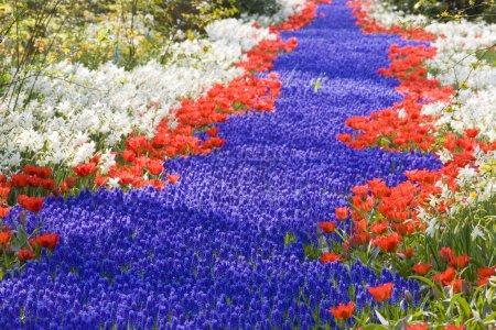 Photo pour Keukenhof Gardens, Lisse, Pays-Bas - image libre de droit