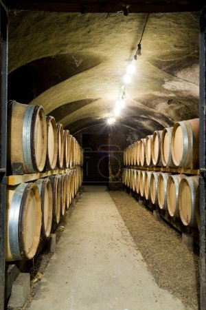 Wine cellar in Burgundy
