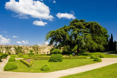 Garden of Chateau de Montreuil-Bellay