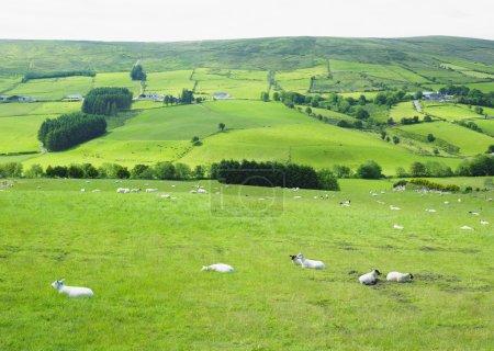 Photo pour Montagnes Sperrin, comté de Tyrone, Irlande du Nord - image libre de droit