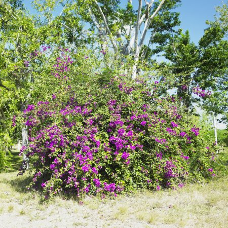 Botany garden, Jard