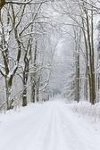 Zasněžené silnice, Česká republika