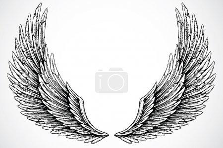 Photo pour Ensemble d'ailes illustrées, isolées sur fond blanc - image libre de droit