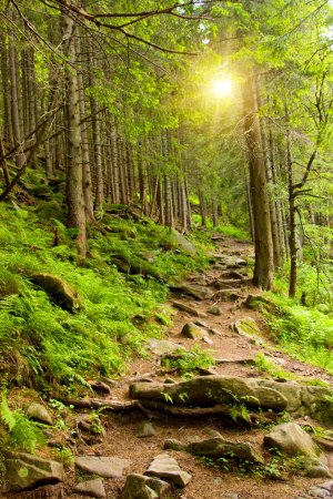 Pathway in mountains forest