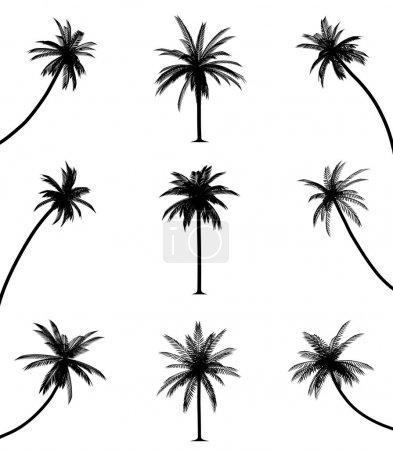 Illustration for Palm trees on isolated white background. EPS file available. - Royalty Free Image