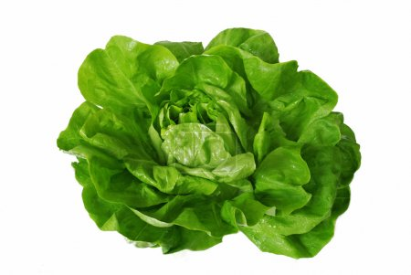 Photo for Head of green fresh lettuce isolated over white - Royalty Free Image