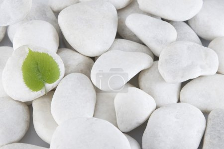 White stones and green leaf