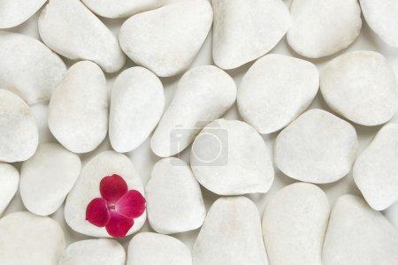 Photo pour Pétales rouges sur fond de galets blancs, concept détente et méditation - image libre de droit