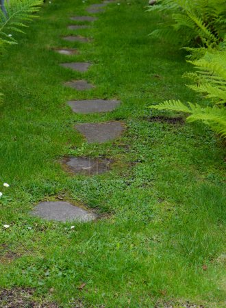 Photo for Stone paver patch through a garden bordered by grass and ferns - Royalty Free Image