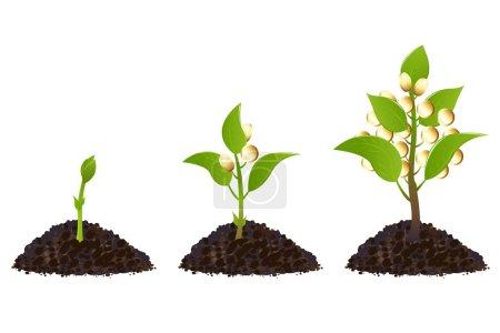 Money plants life process