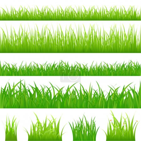 Illustration for 4 backgrounds of green grass and 4 tufts of grass, Isolated On White - Royalty Free Image