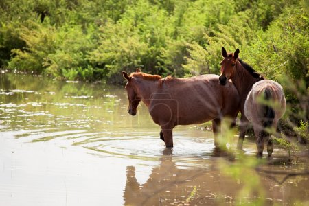 Two horses rescued in water from the heat...