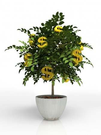 Photo for Money tree in flowerpot isolated on white background - Royalty Free Image
