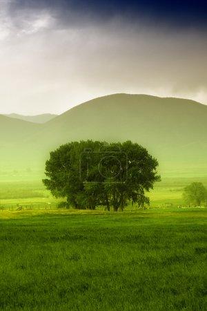 Tree behind a farm