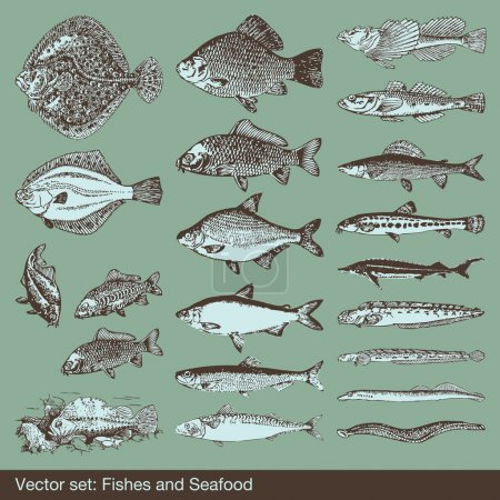 Fish vector set background