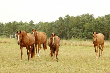 Tres caballos .
