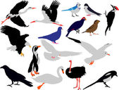 Birds collection vector