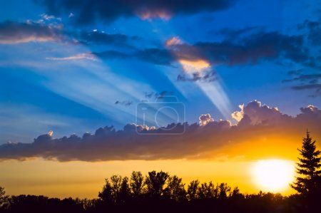 Photo for Trees silhouette, clouds, sky with sun beams - Royalty Free Image