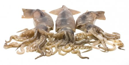 Three nice fresh squids isolated on white backgrou...