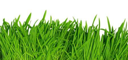 Green grass background, high resolution