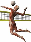 ženské anatomické tělo - volejbal