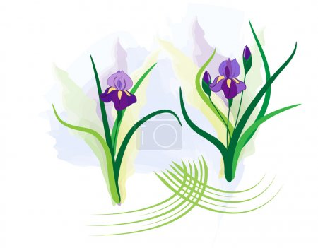 Illustration for Purple irises with watercolor background - Royalty Free Image