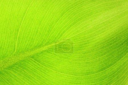 Photo for Leaf details - Royalty Free Image