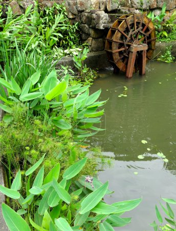 Pool with water wheel