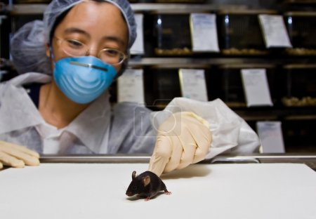 Scientist with black mouse