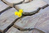 Power Of Life Flower