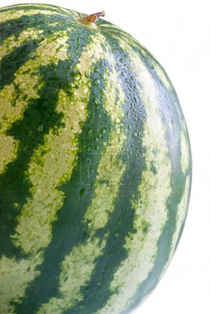 Big ripe watermelon with water drops